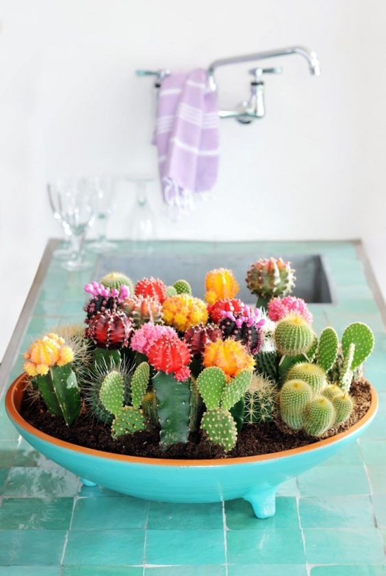 A bowl of colorful succulants